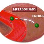 El problema de Engordar con el Metabolismo Rapido