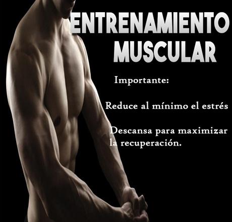entrenamiento-muscular