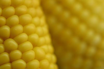 maíz engorda