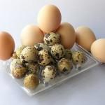 Las fuentes de Alimentos ricos en proteínas para bebés