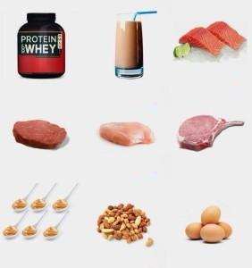 importancia de la proteina