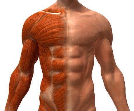 masa corporal magra
